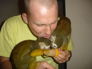 Two cutest Capuchin and Two baby Squirrel monkeys Ready !