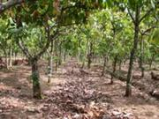 COCOA FARMS, FARMLANDS, COMMERCIAL AND RESIDENTIAL PLOTS FOR SALE !!!